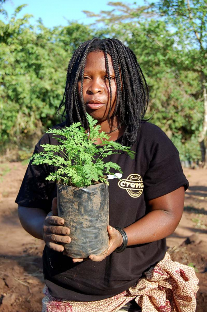 Afrikanerin mit einer Artemisia-Pflanze in der Hand