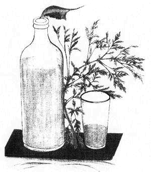 graphics of a bottle with an artemisia plant